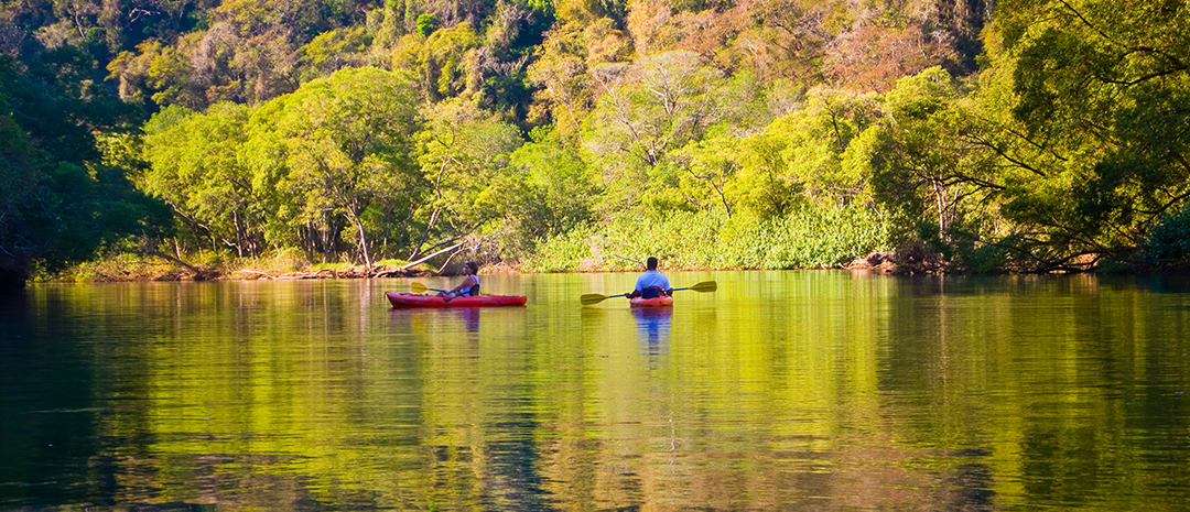 Take a tour to the mangroves